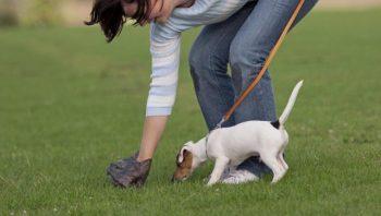 Правила содержания домашних животных в Чериковском районе