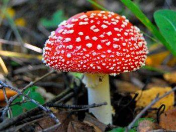 Специалисты Чериковского райЦГЭ напоминают об опасности отравления грибами