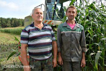 Уборка кукурузы зараз вядзецца ў Чэрыкаўскім раёне