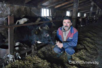 В работе — трудолюбив и принципиален животновод фермы «Богдановка» ОАО «Чериковрайагропромтехснаб» Александр Пипко
