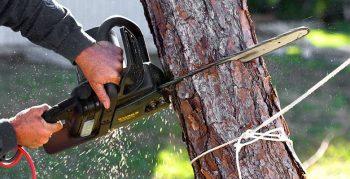 Как срезать дерево  и не нарушить закон? Об этом и не только корреспонденту «ВЧ» рассказал начальник Чериковской районной инспекции охраны природных ресурсов и окружающей среды Андрей Новиков
