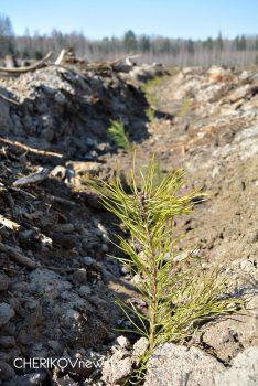 Езерские школьники посадили новый лес