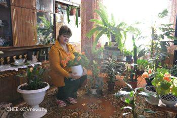 Цветут цветы среди весны. О своей любви к растениям корреспонденту «ВЧ» рассказала Тамара Томашова
