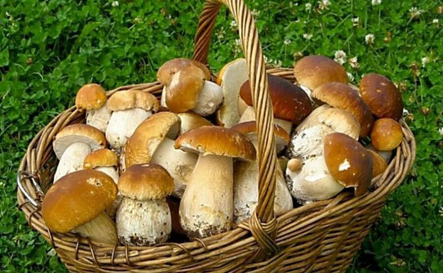 Напоминает о правилах сбора грибов на территориях Чериковского района