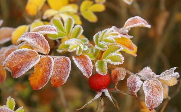 Первые заморозки на почве ожидаются в конце недели в Могилевской области