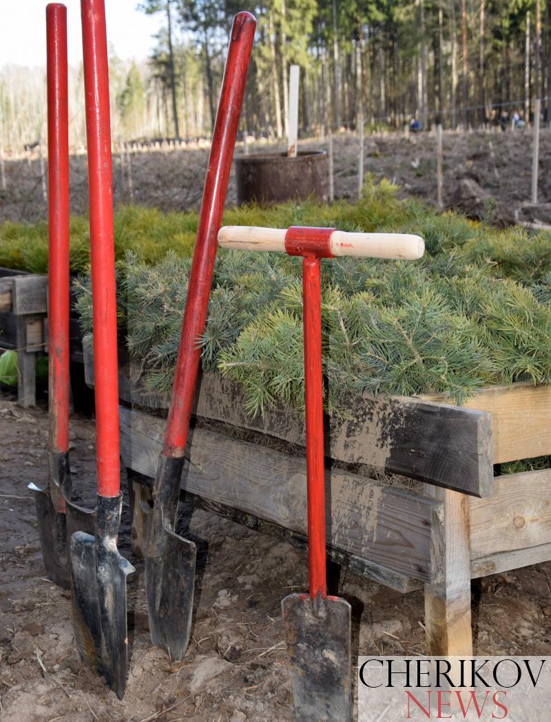 Чериковский лесхоз принял участие в республиканской акции «Неделя леса»