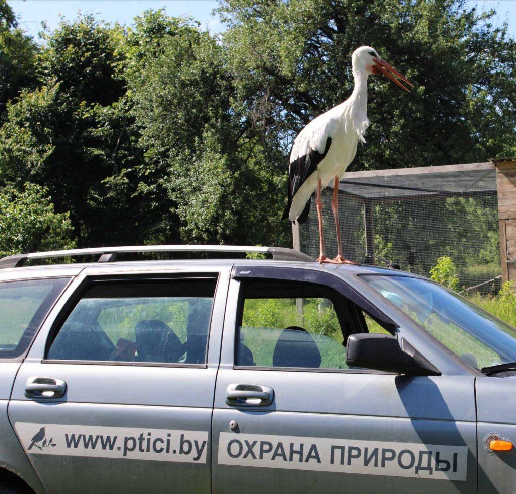Спасти диких птиц:  история людей, которым не все равно