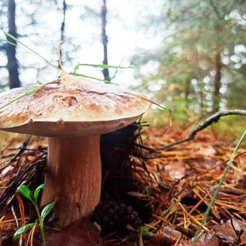"""""""ВЧ"""" подвел итоги конкурса на самое креативное фото грибочков"""